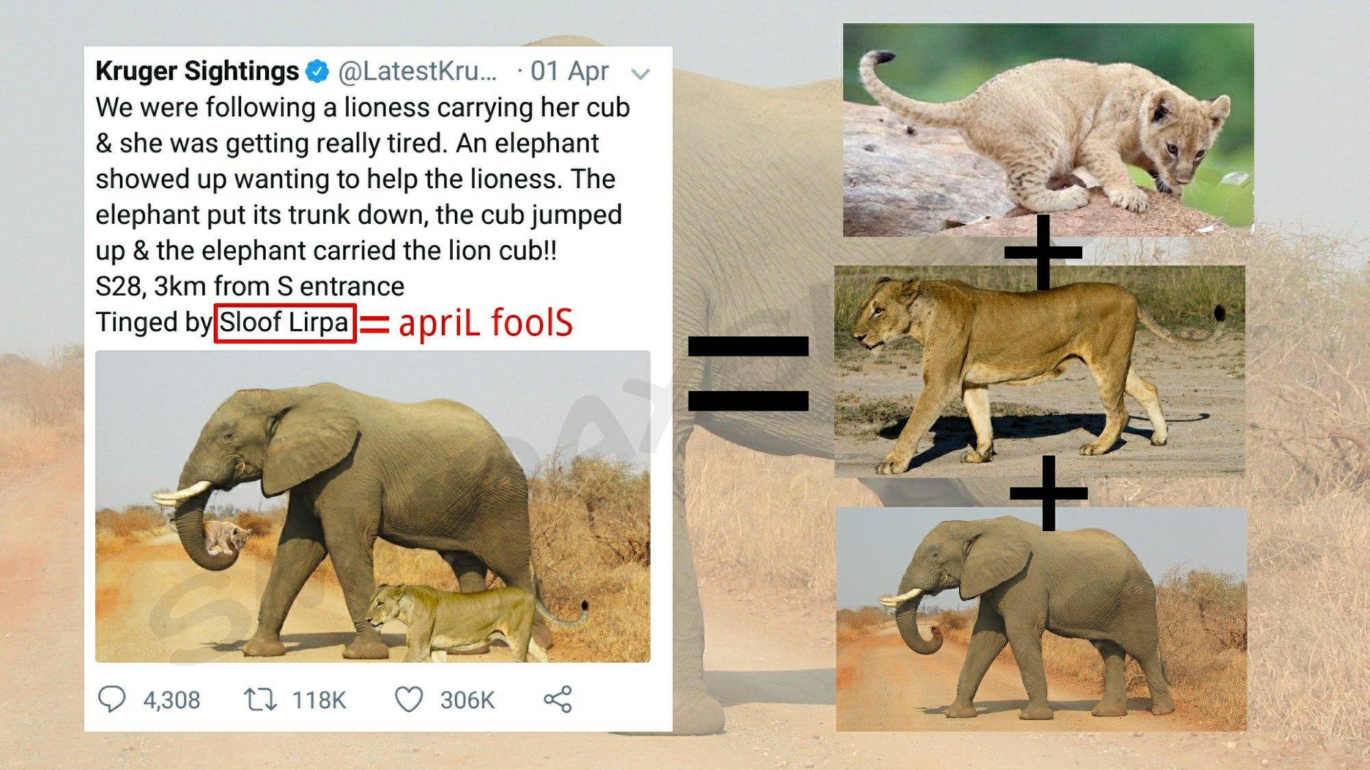 Image result for صورة التسامح الحيواني بين اللبوة والفيل أثناء حريق في كينيا